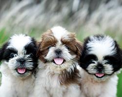 Veterinary Requirements
